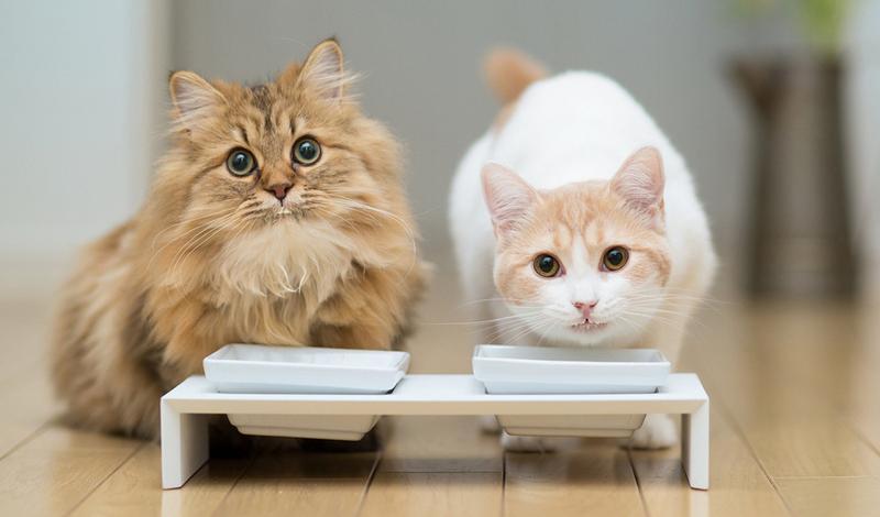 Чем кормить кота, чтобы он набрал вес? Как помочь коту набрать вес? Чем кормить кошку, чтобы она поправилась, потолстела
