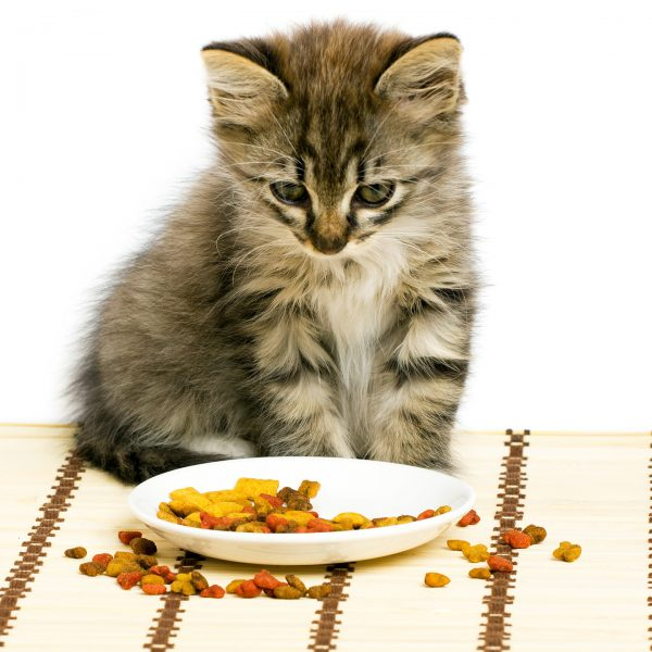 Котик у миски