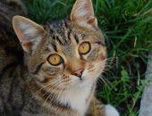 Полосатый кот смотрит вверх