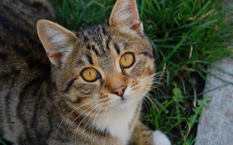 Выпадение третьего века у кошки: возможные причины и помощь питомице
