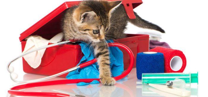 Котёнок и медицинские принадлежности
