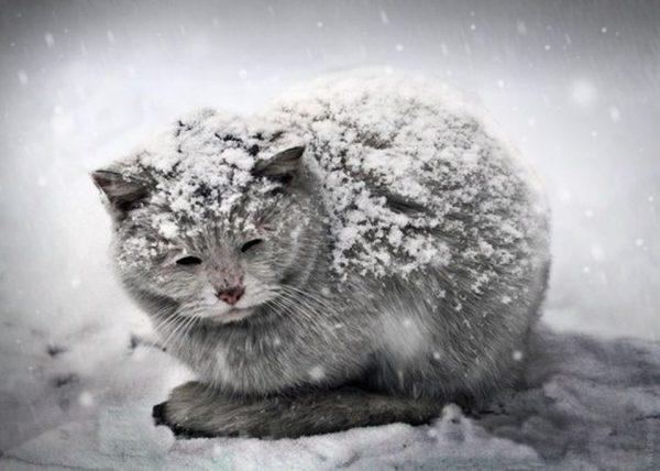 Кошка на морозе