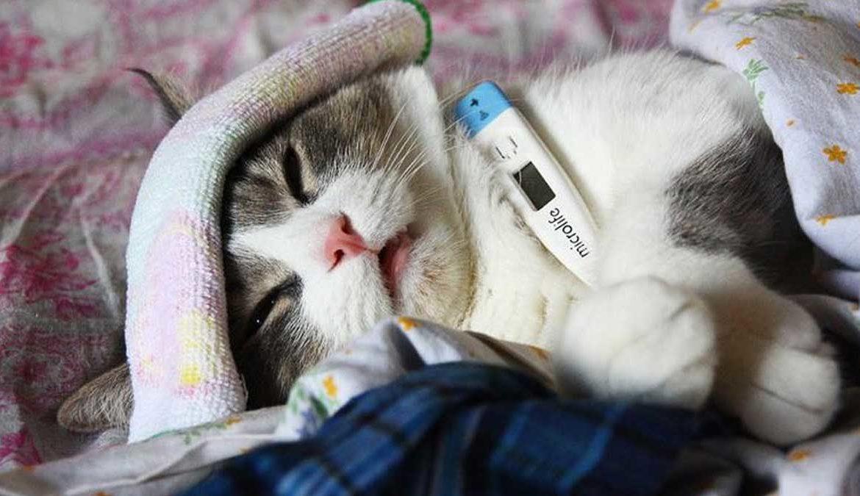 планировали выздоравливай кошка картинки сочный тандем красного