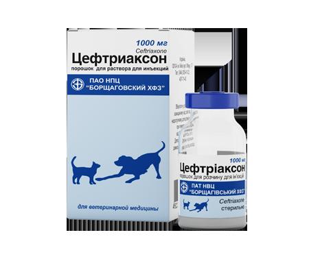 Цефтриаксон для кошек и собак