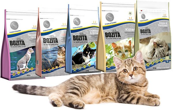 Кошка на фоне кормов