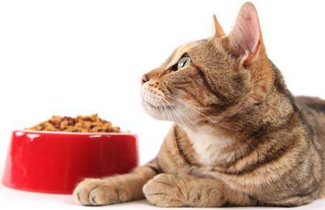 Кошка на фоне миски