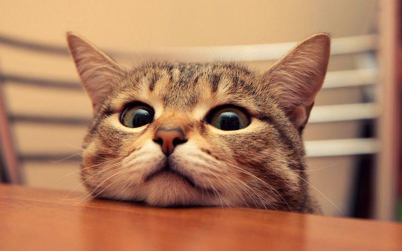 Кот или кошка писает кровью: с чем связано ее наличие в моче и как лечить животное
