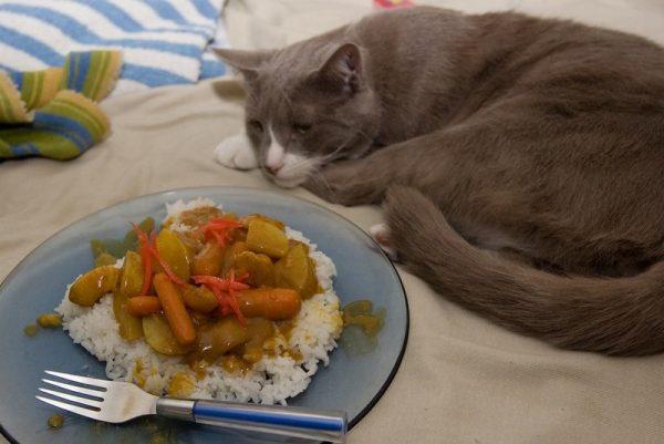 Отказ кошки от еды