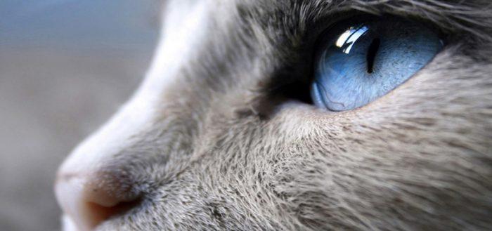 Кошка в профиль