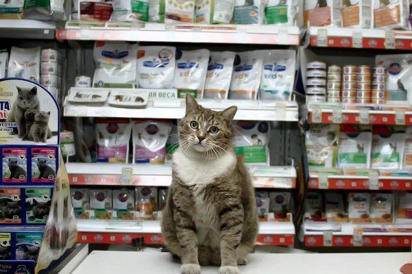 Кот на фоне витрин с кошачьими кормами