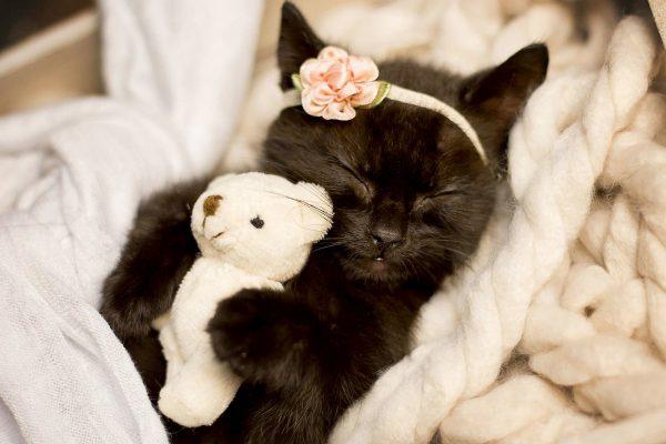 Чёрный котёнок спит с мишкой