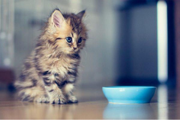 Котёнок не ест