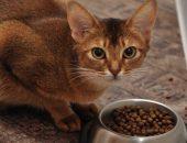 кошка ест корм