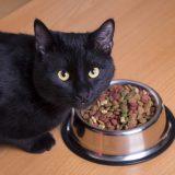Кошка и сухой корм