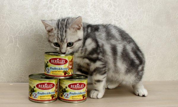 Котик и корм Berkley