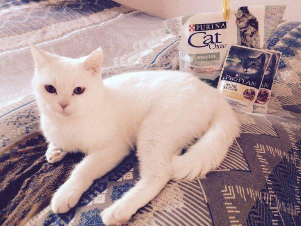 Корм для кошек производства пурина thumbnail