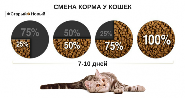 Схема перевода кошки на новый корм