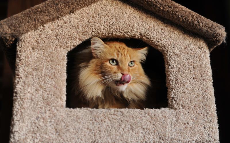 Как построить домик для кошки своими руками