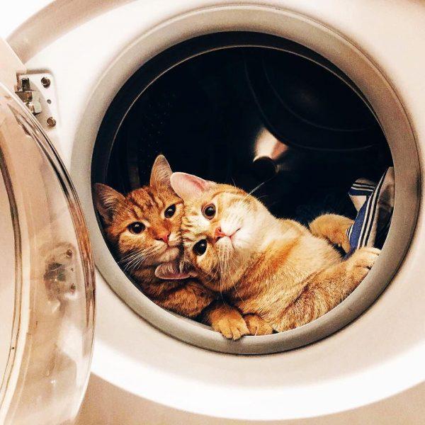 Кошки выбирают себе странные места для отдыха
