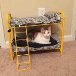 Двухъярусная кровать для кошек