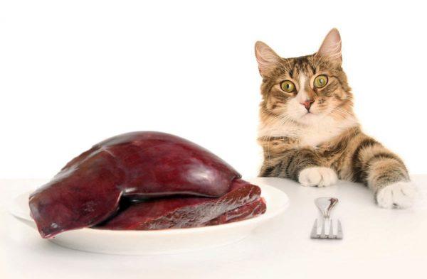 Кот и говяжья печень на столе