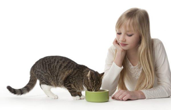 Кормление котов с больной печенью
