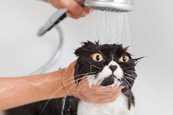 Кот под душем