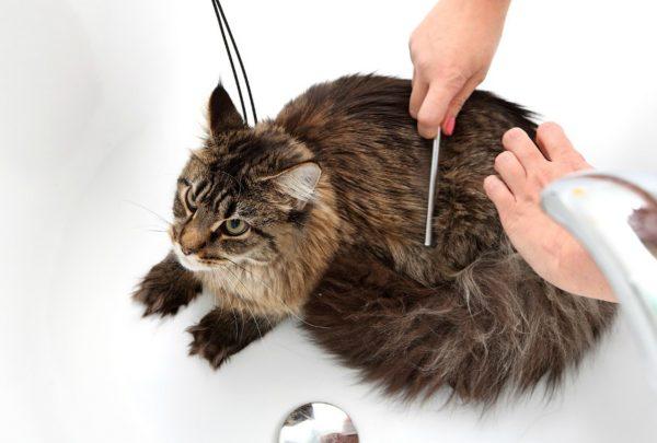 Расчёсывание кошки
