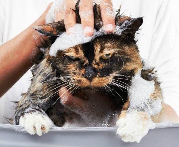 Кот в пене