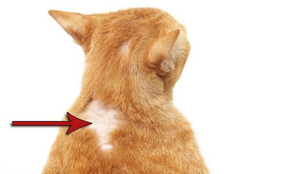 Кошачья аллергия