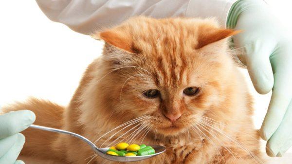 Кошке дают витамины