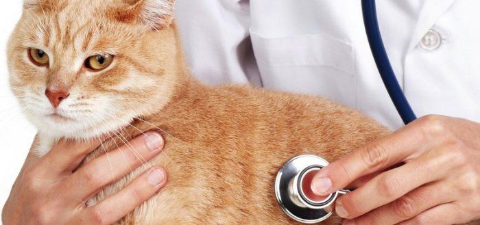 Кот и врач