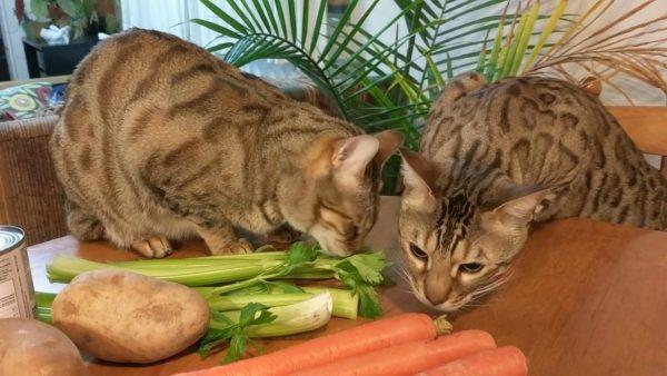 Кошки нюхают овощи