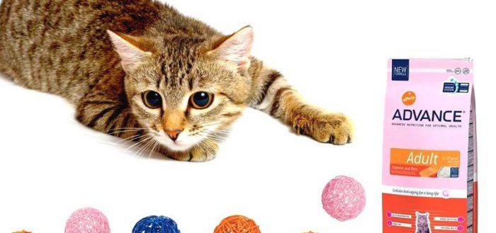 Кошка, шарики и корм Advance