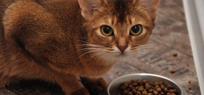 Кошка есть сухой корм