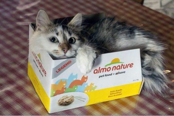 Кошка в коробке из под корма
