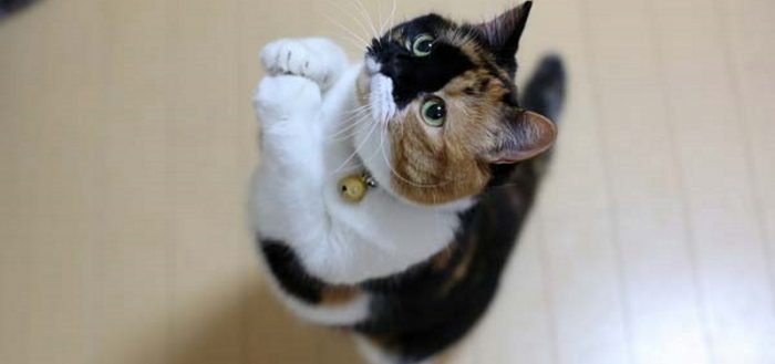 Кошка о чём-то просит