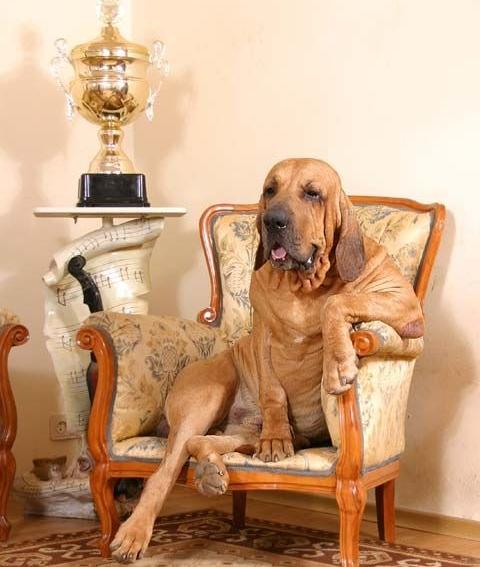 Фила бразилейро в кресле