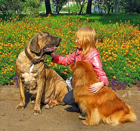 Фила бразилейро с девочкой и собачкой