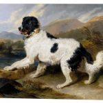 Картина Э. Ландсира «Лион: ньюфаундлендский пёс»