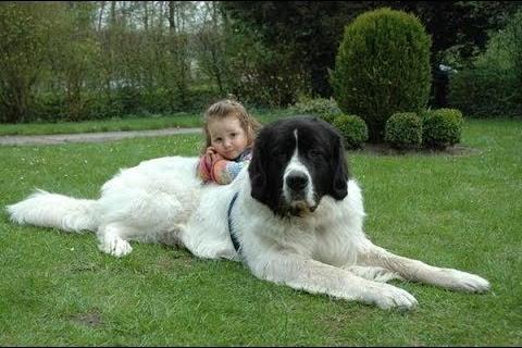 Ландсир с ребёнком