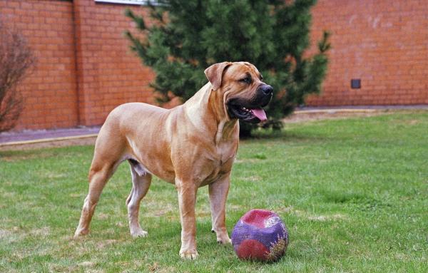 Бурбуль с мячом
