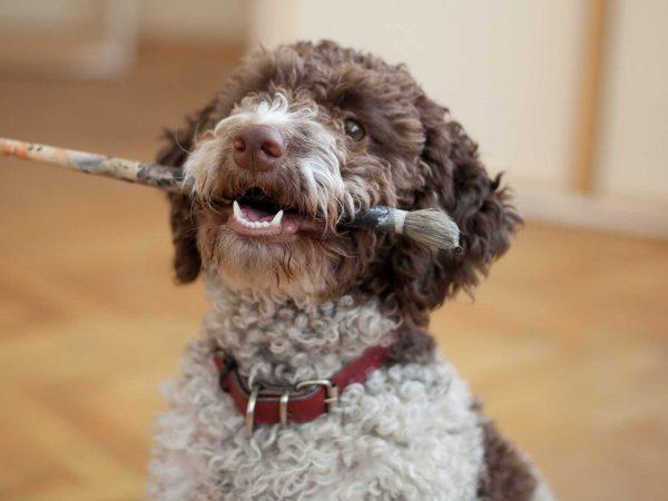 Собака с кисточкой