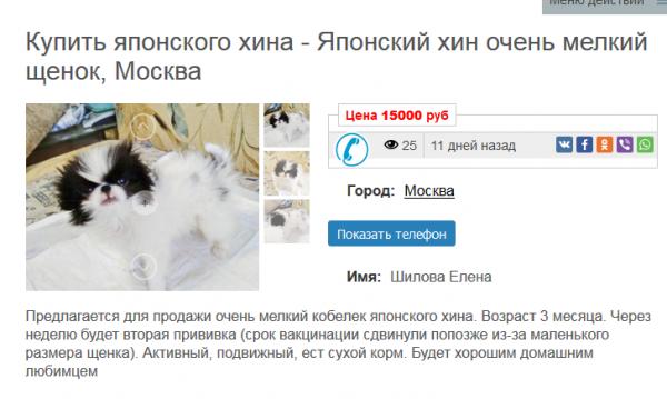 Покупка щенка для дома