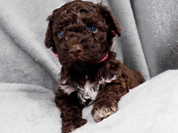 Месячный щенок