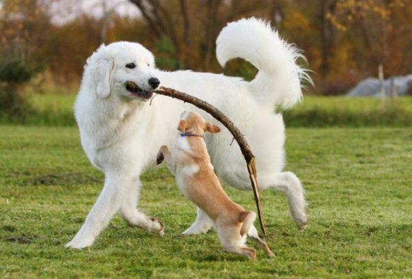 Чувач играет с собачкой