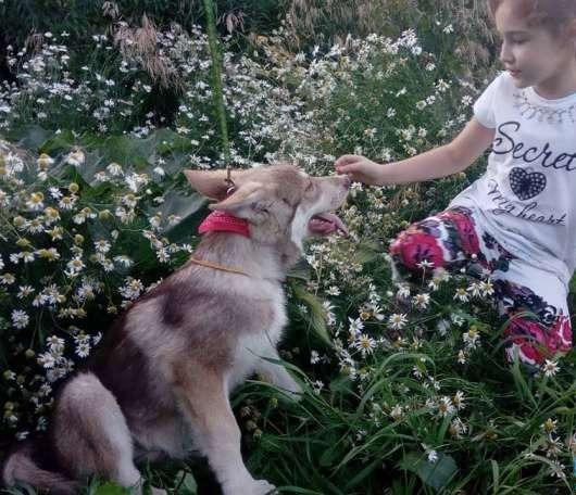 Вольфхунд с девочкой