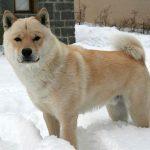Хоккайдо в снегу