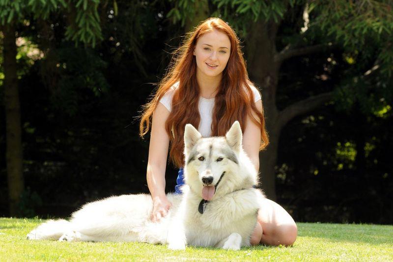 Лютоволки Старков: обзор северной инуитской собаки
