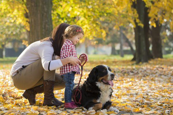Бернский зенненхунд с женщиной и ребёнком